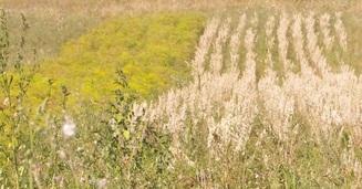 champ-agriculture-biologique-fleurileges-des-collines