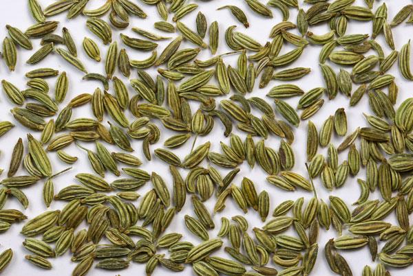 fenouil-graines_tisane-bio_les-fleurileges-des-collines