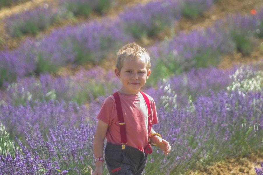 fleurs-agriculture-lavandes-fleurileges-des-collines