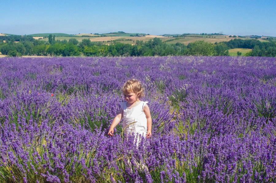 fleurs-lavandes-fleurileges-des-collines